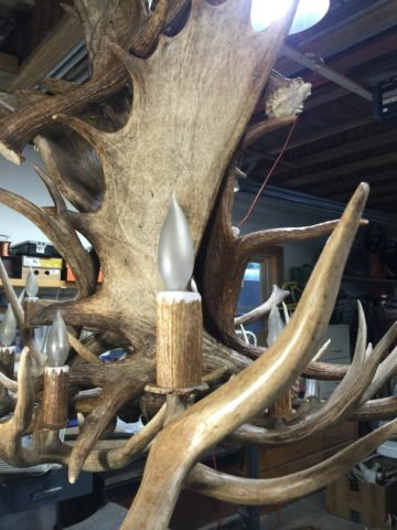 real antler light covers