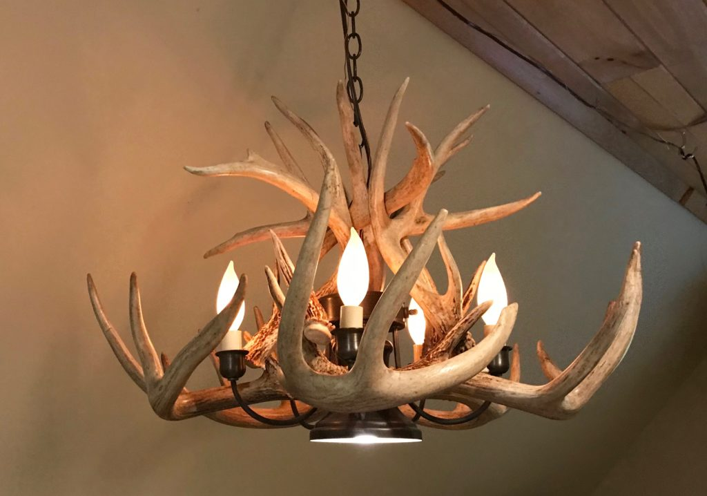 Chandelier whitetail antler with downlight