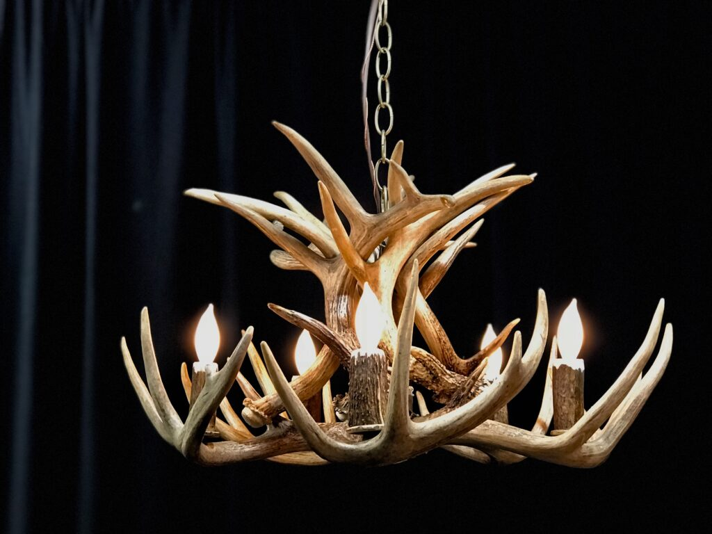 white tail antler chandelier